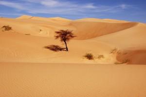 CHINGUETTI mauritania  (15)